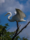 Oiseau aquatique image libre de droits