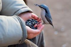 Oiseau atterrissant au bras de l'enfant Images libres de droits