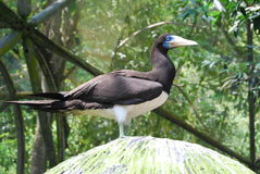 Oiseau au captif Photographie stock libre de droits