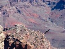 Oiseau au-dessus de canyon Photo libre de droits