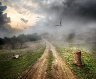 Oiseau au-dessus de route de campagne Image libre de droits