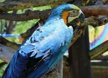 Oiseau au zoo photographie stock