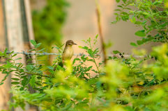 Oiseau avec affliction Photos stock