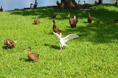 Oiseau avec des ailes étendues Photographie stock libre de droits