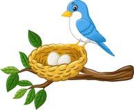 Oiseau avec l'oeuf dans le nid d'isolement sur le fond blanc Photographie stock