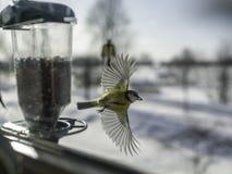 Oiseau avec la graine dans le bec image stock
