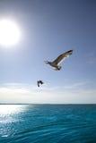 Oiseau avec le coucher du soleil Images stock