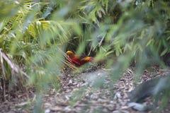 Oiseau avec le plumage exotique lumineux photo stock