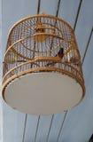 Oiseau barbu rouge de bulbul dans la cage classique unique Image stock