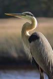 Oiseau beau Photos libres de droits