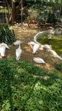 Oiseau blanc images stock