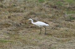 Oiseau blanc photos libres de droits