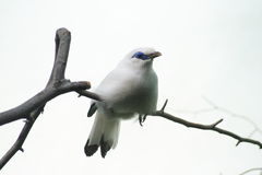 Oiseau blanc exotique Photographie stock