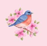 Oiseau bleu avec les fleurs roses Photos stock