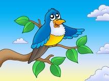 Oiseau bleu mignon sur le branchement Photos libres de droits