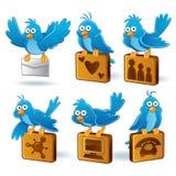 Oiseau bleu social de réseau Photographie stock libre de droits