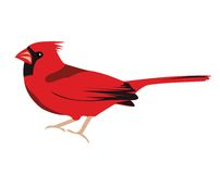 Oiseau cardinal illustration stock
