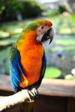 Oiseau coloré Photographie stock