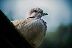 Oiseau coloré Photos libres de droits