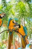 Oiseau coloré de perroquet Photo libre de droits