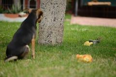 Oiseau courageux Photo libre de droits