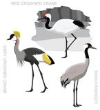 Oiseau Crane Set Cartoon Vector Illustration Images stock