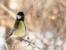 Oiseau curieux Image libre de droits