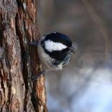Oiseau curieux Photo stock