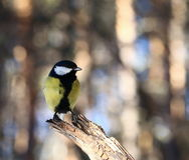 Oiseau curieux Photos stock