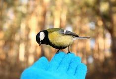 Oiseau curieux Photo libre de droits