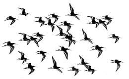 Oiseau d'échassiers image libre de droits
