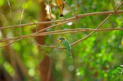 oiseau d'Abeille-mangeur près de lac Baboyaga en Ethiopie, février 2019 photographie stock libre de droits