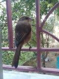 Oiseau d'amour Image stock