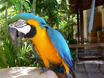 Oiseau d'Arara Photographie stock libre de droits