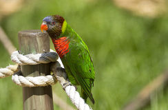Oiseau d'arc-en-ciel Photographie stock libre de droits