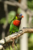 Oiseau d'arc-en-ciel Photos libres de droits