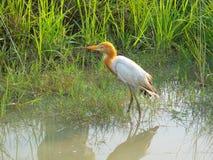 Oiseau d'eau image stock
