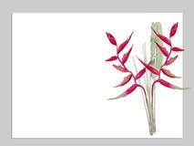 Oiseau d'illustration de vecteur d'aquarelle de paradis Photo libre de droits
