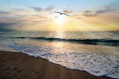 Oiseau d'océan de coucher du soleil Photo libre de droits