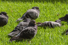 Oiseau d'une plume Images stock