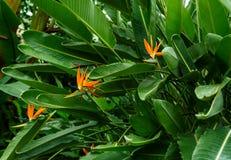 Oiseau d'usine de paradis avec des fleurs photographie stock libre de droits