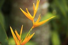 Oiseau d'usine de paradis dans le jardin Photographie stock libre de droits