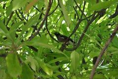 Oiseau dans des feuilles vertes Photos stock