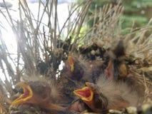 Oiseau dans différentes couleurs photographie stock libre de droits