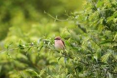 Oiseau dans l'arbre Photographie stock