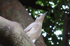 Oiseau dans l'arbre Images stock