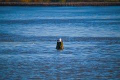 Oiseau dans l'eau Photos stock