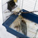 Oiseau dans l'effort images libres de droits
