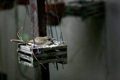 Oiseau dans l'emboîtement Photos libres de droits