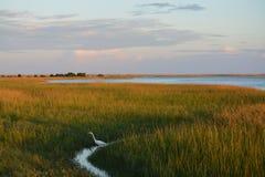 Oiseau dans l'herbe photo stock
